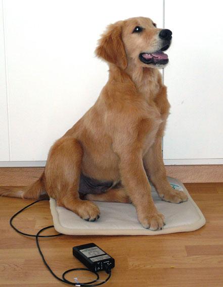 Auch Ihr Haustier kann von Bio-Puls-19 profitieren